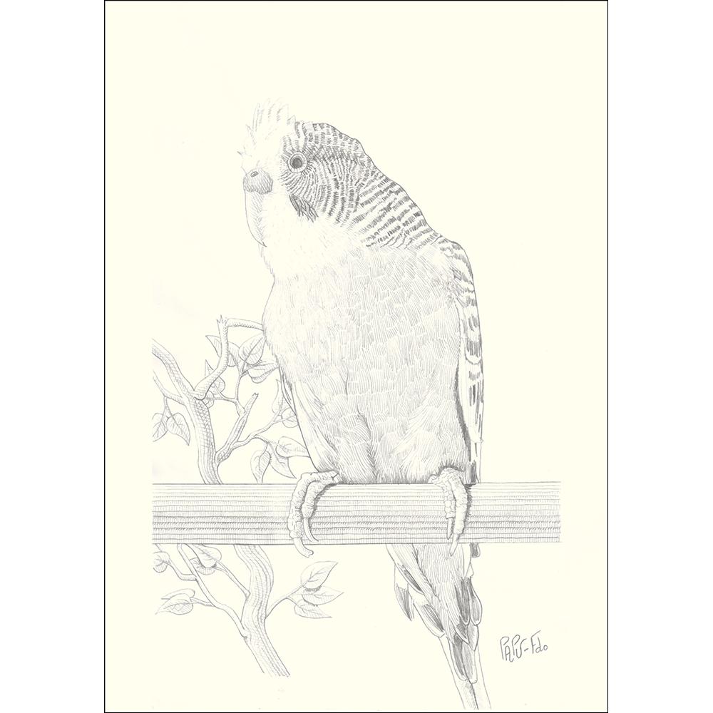 Dibujo realizado mediante la técnica de rayado sin difumino con portaminas de tamaño 0'5. Aparece un periquito a cuerpo completo, posado sobre una barra circular de madera. Detrás, en la parte izquierda, hay una rama llena de hojas.